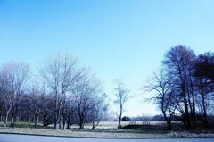 冬の木立 4
