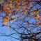 晩秋の上野公園 2