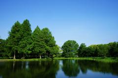 青と緑の世界