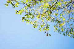 小春日和の秋