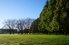 草原の朝 9