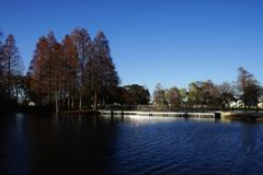 師走の湖畔 4