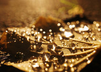 落ち葉と水玉