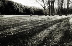草原の木立 2