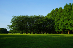 草原の朝 12