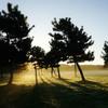草原の朝 5