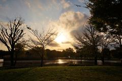 秋の舎人公園 2