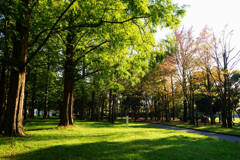 秋の水元公園 10