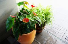階段下の観葉植物 2