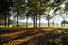 秋の水元公園 12