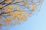 晩秋の舎人公園 2