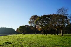 草原の朝 10