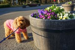 花と犬 1