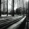 冬の木立 1