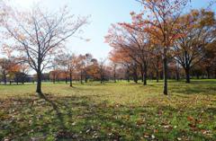 舎人公園の秋 1