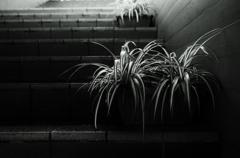 階段下の観葉植物 1