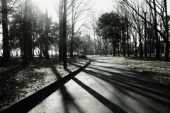 晩秋の水元公園 9