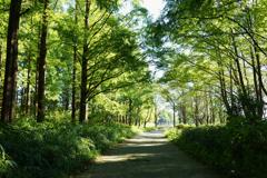 森の入口または出口 1