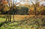 晩秋の舎人公園 3