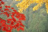 紅葉 IN 大井平公園
