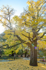 秋のヒカリ