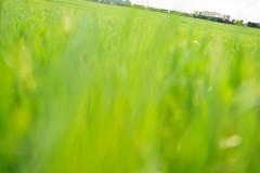 Green road
