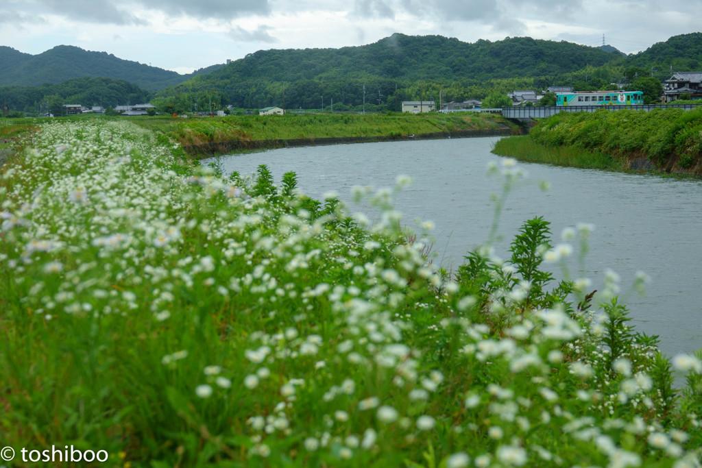 野花咲く川超えて