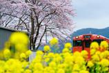 咲き競う春