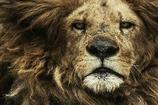 キングの威厳