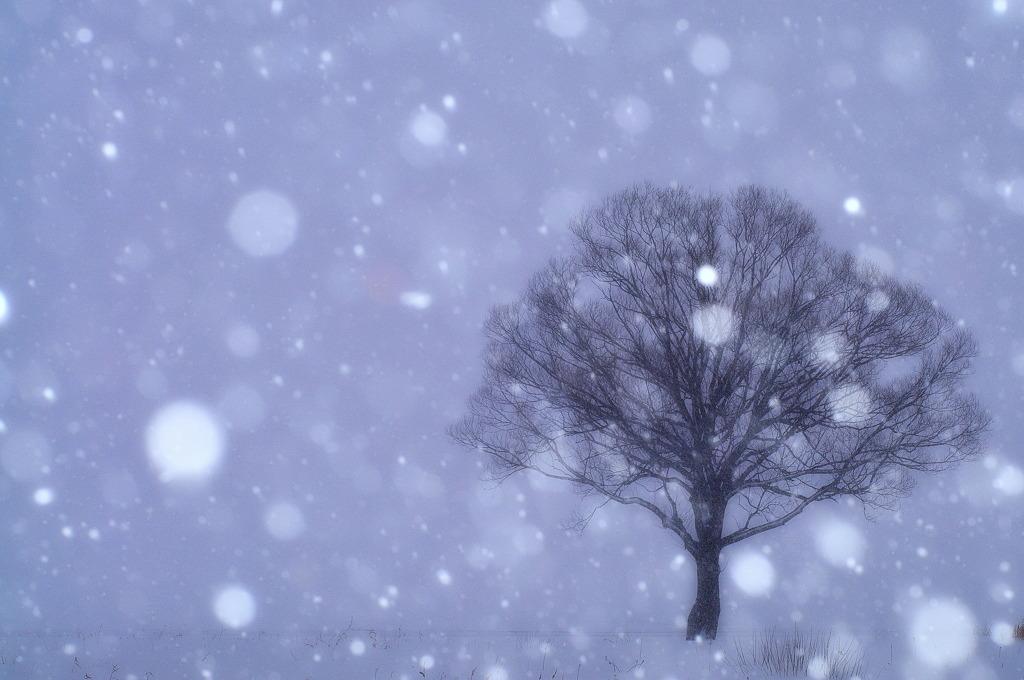 夢幻情景 ~冬~