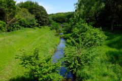 緑なす野川