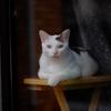 浅窓の令猫