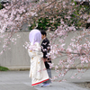 桜色の綿帽子