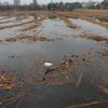 丸刈りの不忍池