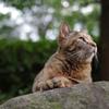ムギワラ猫