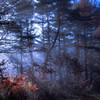 森の中の彩