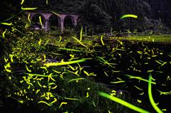 眼鏡橋の輝く時