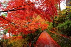 奈良吉野紅葉