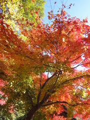 広島・三景園