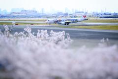 桜、飛行機、黄砂に霞む梅田。