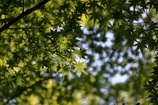 新緑の午後