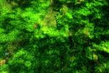 緑の揺らぎ
