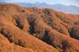 秋色絨毯に八ヶ岳連峰を添えて