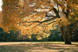 Scenery of autumn