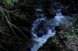 高尾山の渓流