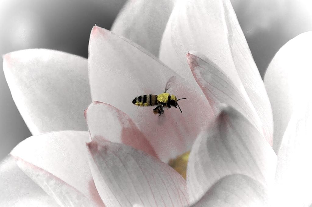 白蓮に遊ぶ小さきもの