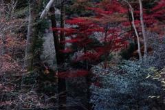 いつかの秋