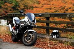 秋のヤビツ峠