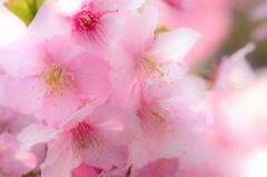 春よこんにちわ.:*♪