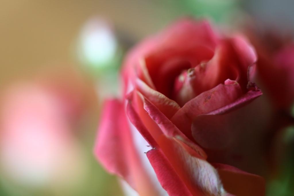 テーブルの花・・・バラ